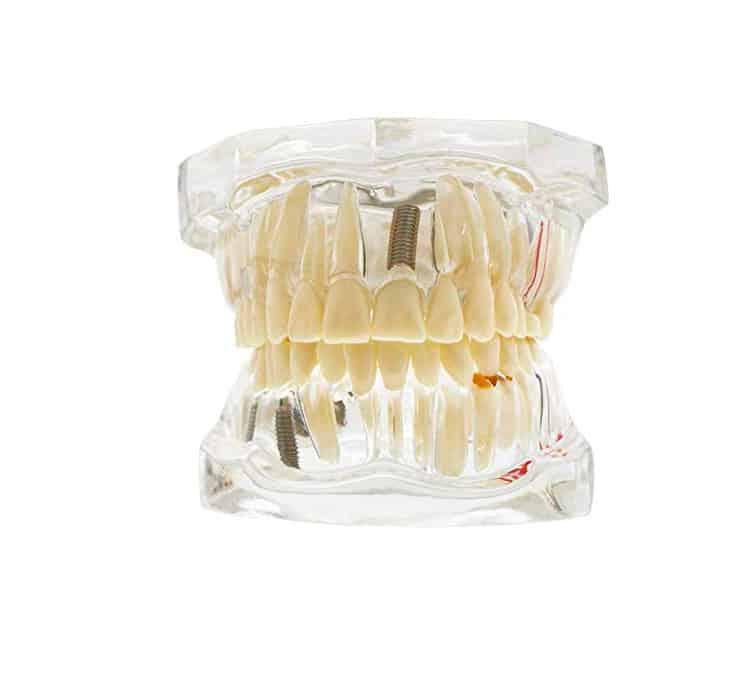 comprar modelo boca anatomico
