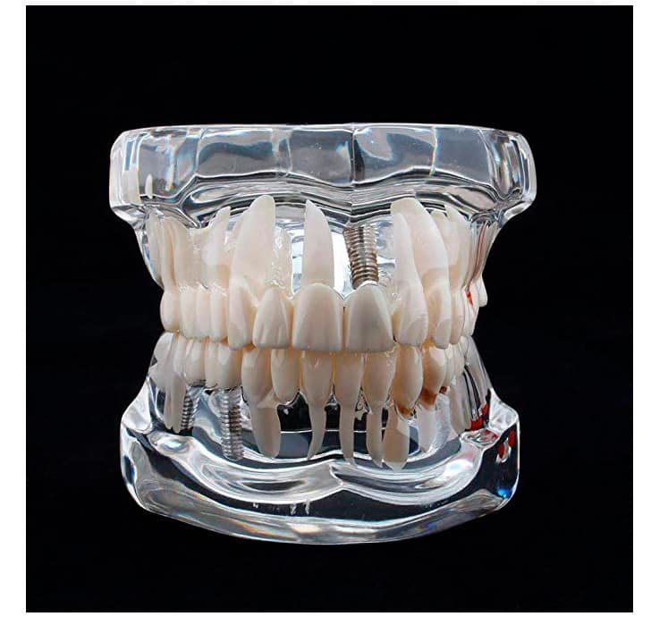 comprar Fantoma boca dental
