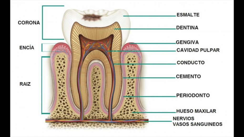 dientes no son blancos