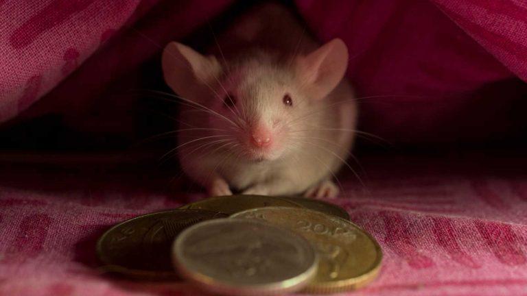El ratoncito Pérez todo lo que debes saber sobre este ilustre personaje